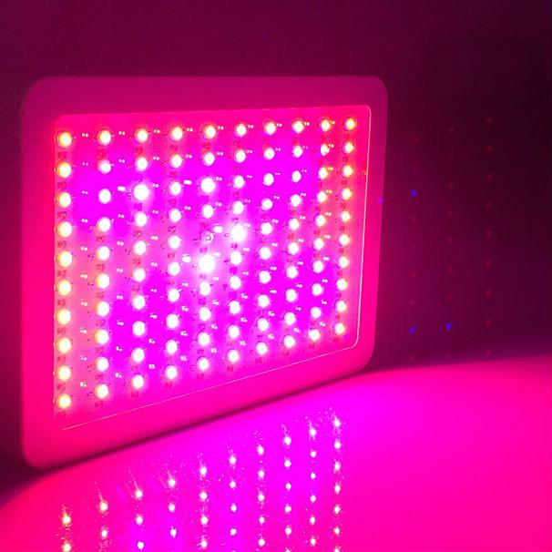 Led Grow Light 300w Купить